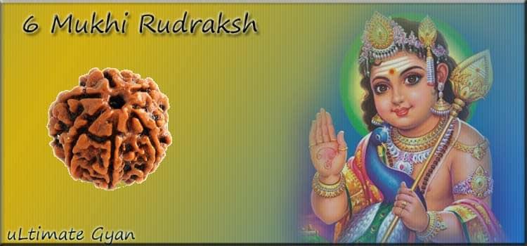 6 Mukhi Rudraksh Benefits in hindi