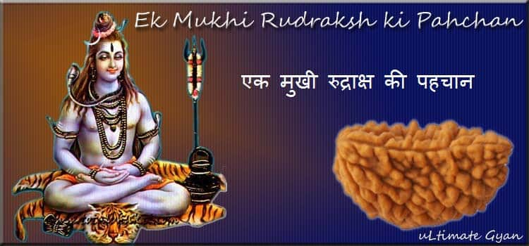 Ek Mukhi Rudraksha ki Pahchan in hindi