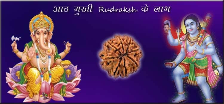 8 Mukhi Rudraksh Benefits Hindi
